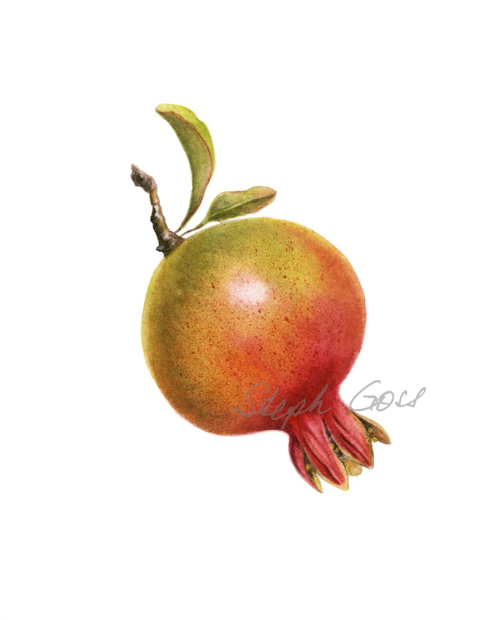 1. Pomegranate