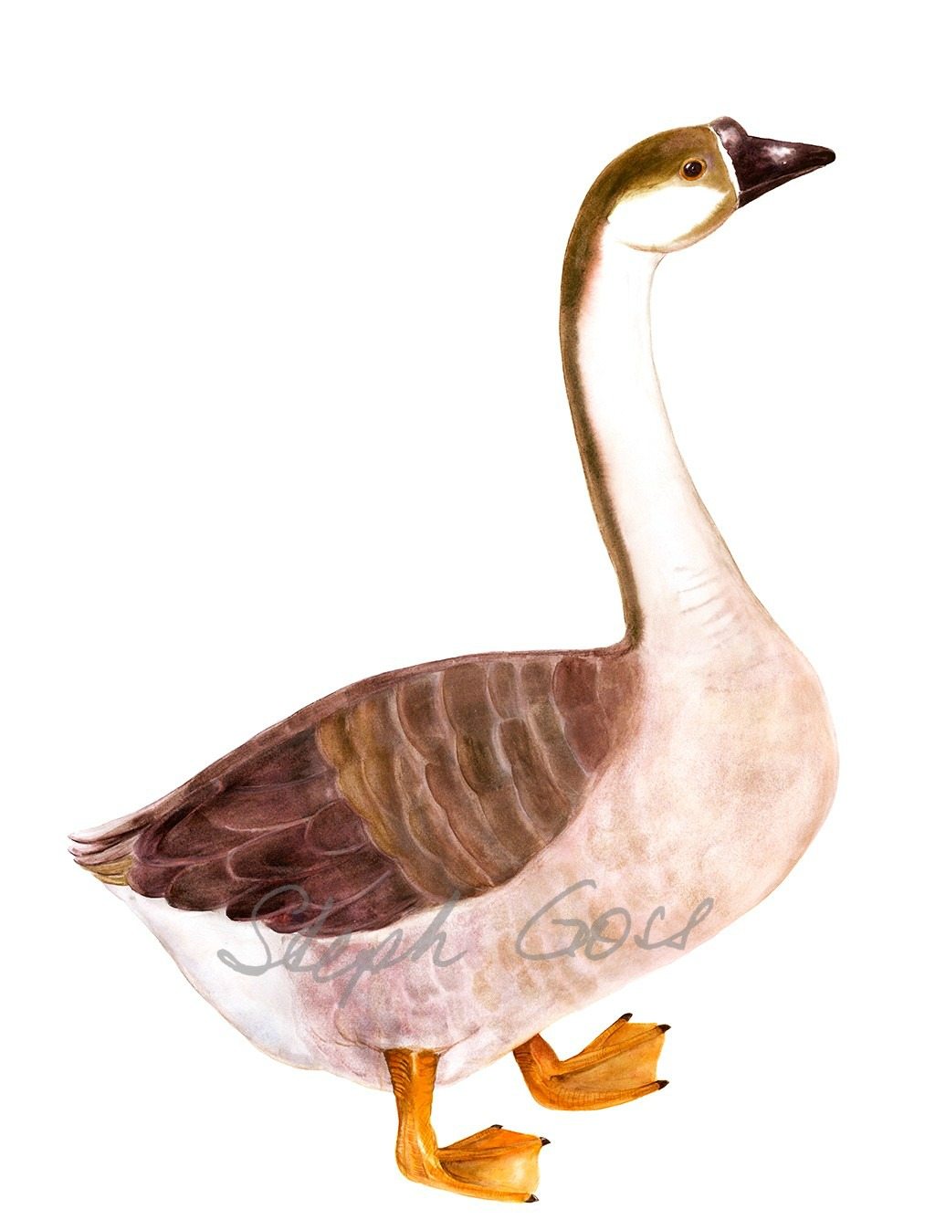 18. Goose
