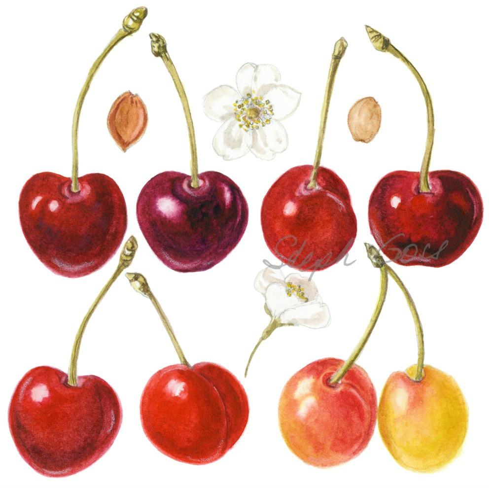 2. Cherries
