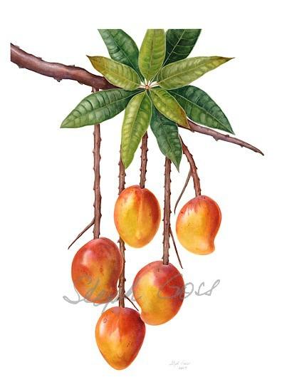 20. Mango