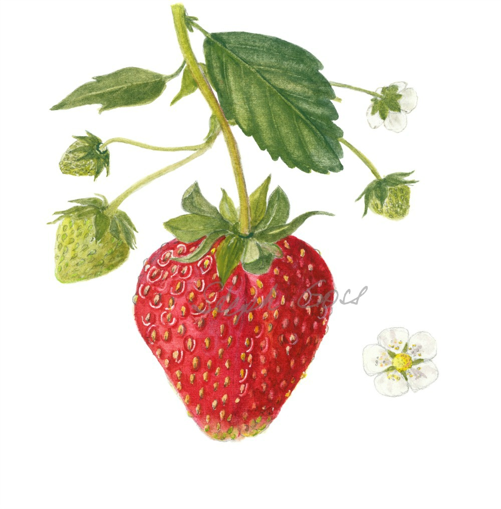 4. Strawberry