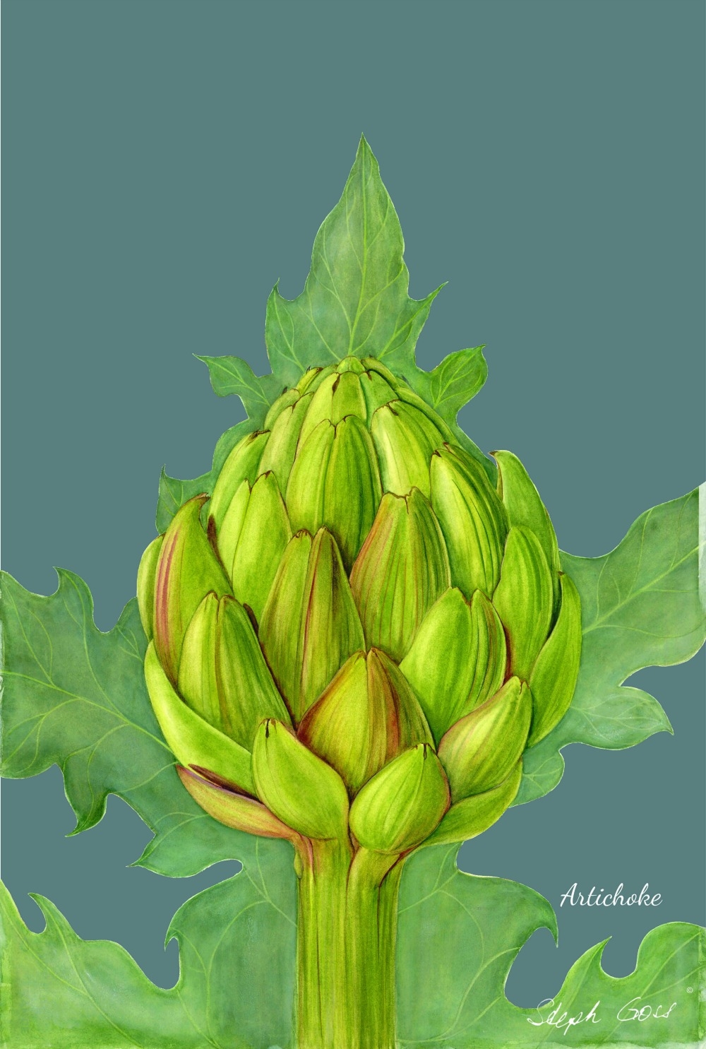 Artichoke on blue-grey